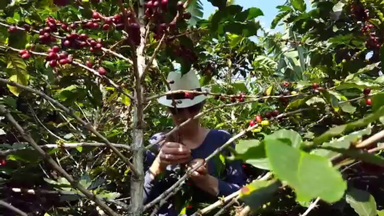 Tour Cultivos de Café - Jardín Antioquia - Salidas Compartidas